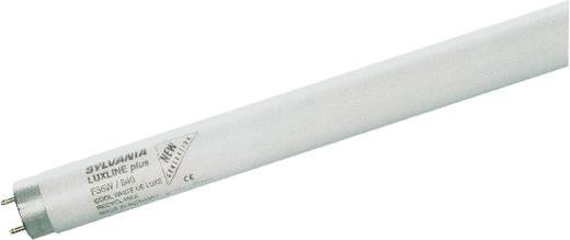 OSRAM Leuchtstoffröhre EEK: A (A++ - E) G13 590 mm 230 V 18 W Tageslicht-Weiß Röhrenform 25 St.