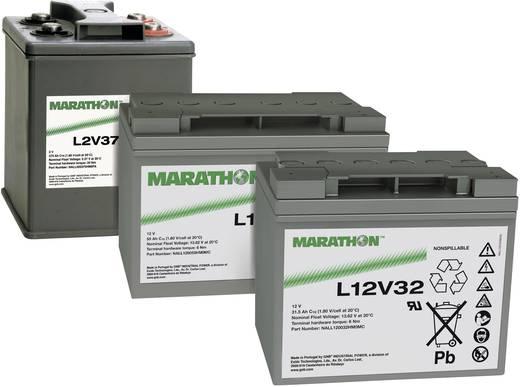 Bleiakku 12 V 31.5 Ah GNB Marathon L12V32 NALL120032HM0MC Blei-Vlies (AGM) (B x H x T) 198 x 175 x 168 mm M6-Schraubanschluss Wartungsfrei
