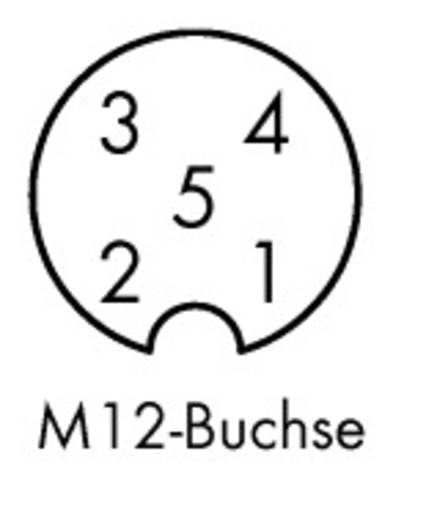 5-Pol. M12 Buchse axial, offenes Ende 10 m 756-5301/050-100 WAGO Inhalt: 10 St.