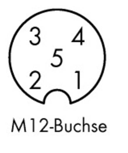 5-Pol. M12 Buchse axial, offenes Ende 10 m WAGO Inhalt: 10 St.