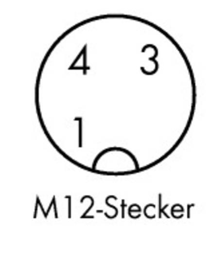 3-Pol. M12 Stecker gewinkelt, offenes Ende 1,5 m 756-5312/030-015 WAGO Inhalt: 10 St.