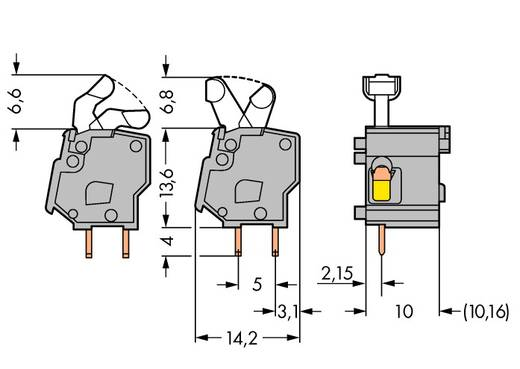 Federkraftklemmblock 2.50 mm² Polzahl 1 257-862 WAGO Grau 300 St.
