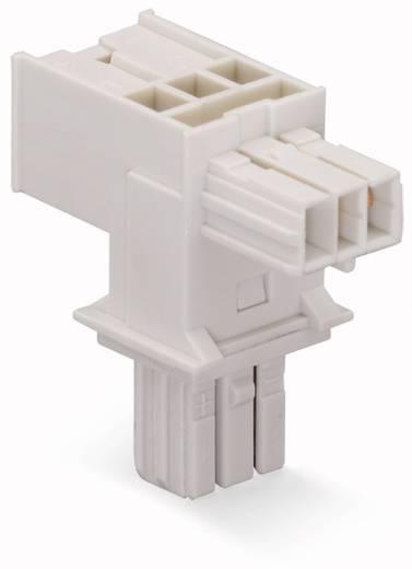 Netz-T-Verteiler Netz-Stecker - Netz-Buchse, Netz-Buchse Gesamtpolzahl: 2 Lichtgrau WAGO 893-1656 25 St.