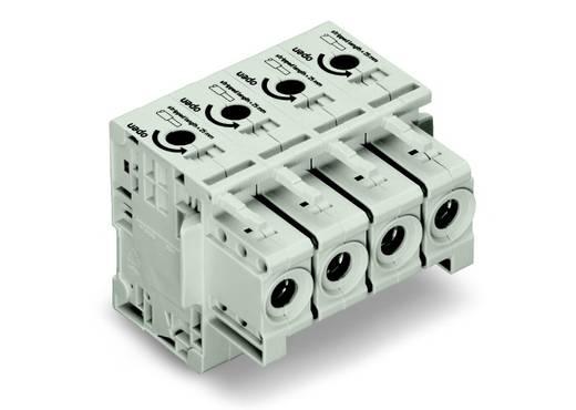 Buchsengehäuse-Kabel 834 Polzahl Gesamt 4 WAGO 834-1104 Rastermaß: 17.50 mm 5 St.