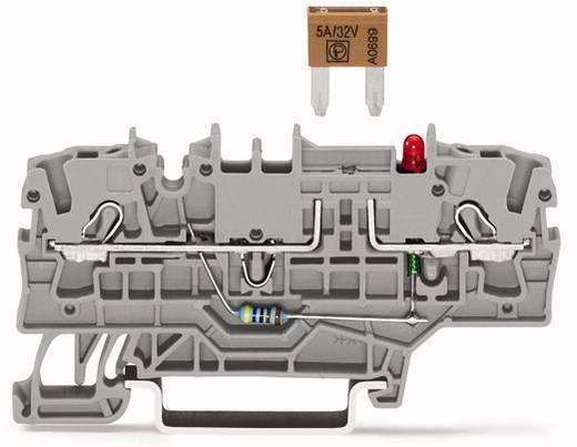 Sicherungsklemme 5.20 mm Zugfeder Grau WAGO 2002-1981/1000-429 50 St.