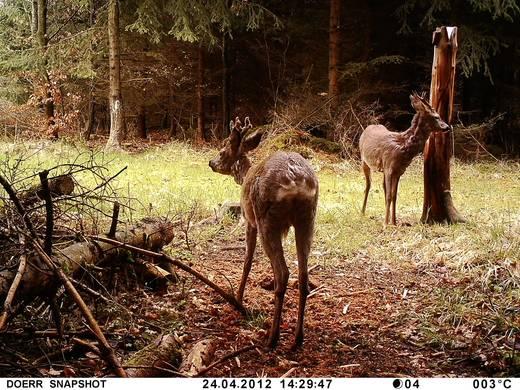 Wildkamera Dörr Foto Snap Shot Mini 5.0 5 Mio. Pixel Black LEDs Camouflage