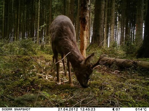 Dörr Foto Snap Shot Mini 5.0 Wildkamera 5 Mio. Pixel Camouflage