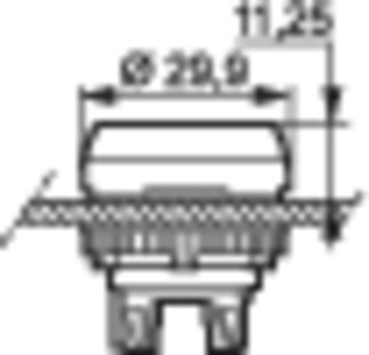 Meldeleuchte Frontring Kunststoff Weiß BACO BAL20SE50 1 St.