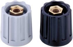 Tête de bouton rotatif Mentor 331.6 noir (Ø x h) 15 mm x 14 mm 1 pc(s)