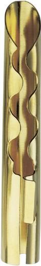 Lautsprecher-Steckverbinder Stecker, gerade Polzahl: 1 Gold Kash 1 St.