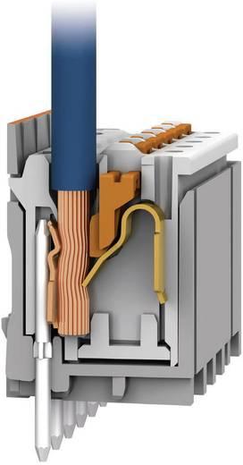 WAGO Buchsenleiste (Standard) 2091 Polzahl Gesamt 5 Rastermaß: 3.50 mm 2091-1175 1 St.