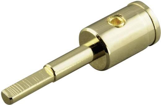 Lautsprecher-Steckverbinder Polzahl: 1 Gold Hama 80754 1 St.