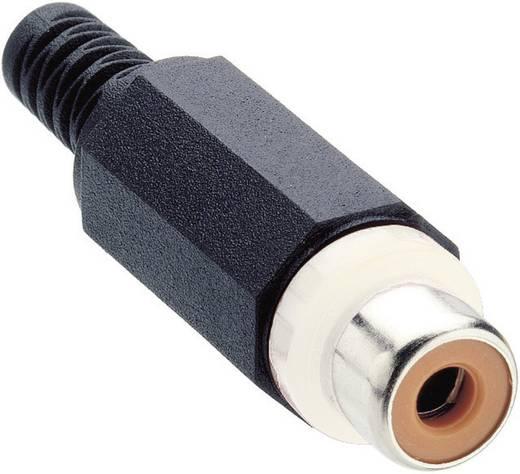 Cinch-Steckverbinder Buchse, gerade Polzahl: 2 Weiß Lumberg XKTO 1 1 St.