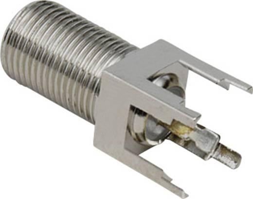 F-Buchse Steckverbinder
