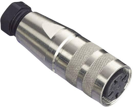 Rundsteckverbinder C091/D Pole: 5 Kabeldose 5 A C091 31D005 100 2 Amphenol 1 St.