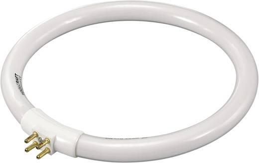 Leuchtstoffröhre TOOLCRAFT 230 V G10q 12 W Tageslicht-Weiß EEK: A Ringform 1 St.