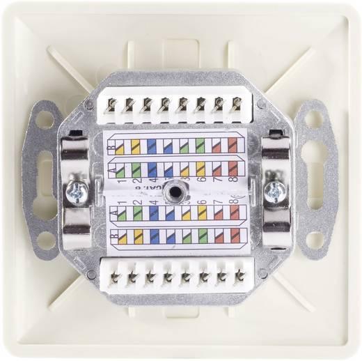 Netzwerkdose Unterputz Einsatz mit Zentralplatte und Rahmen CAT 6 Setec 604697 Perl-Weiß