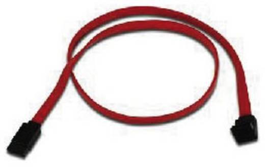 Festplatten Anschlusskabel [1x SATA-Buchse 7pol. - 1x SATA-Buchse 7pol.] 0.60 m Rot Belkin