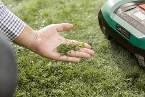 Regelmäßige Rasenpflege gehört ebenfalls zur Gartenpflege