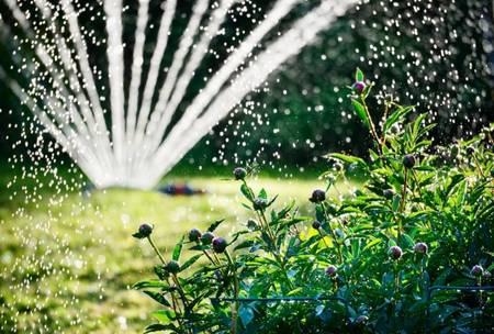 Frischen Rasen feucht halten