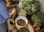 Click UP! Plant dish