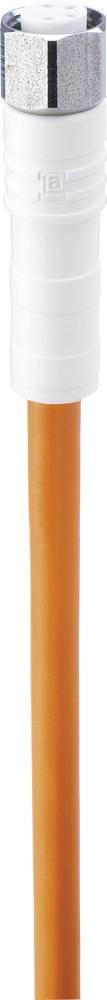Aktuatorski/Senzorski priključni kabel, M8-objemka, ravni poli: 4 WRKMV 4-521/5M Belden vsebuje: 1 kos