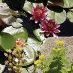 Pond planting basket display mixed