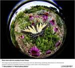 Circulaire Lensbaby Fisheye Samsung