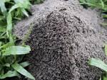 Repousse-fourmis solaire