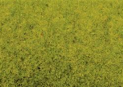 Herbage à répandre NOCH 8300 vert clair 20 g