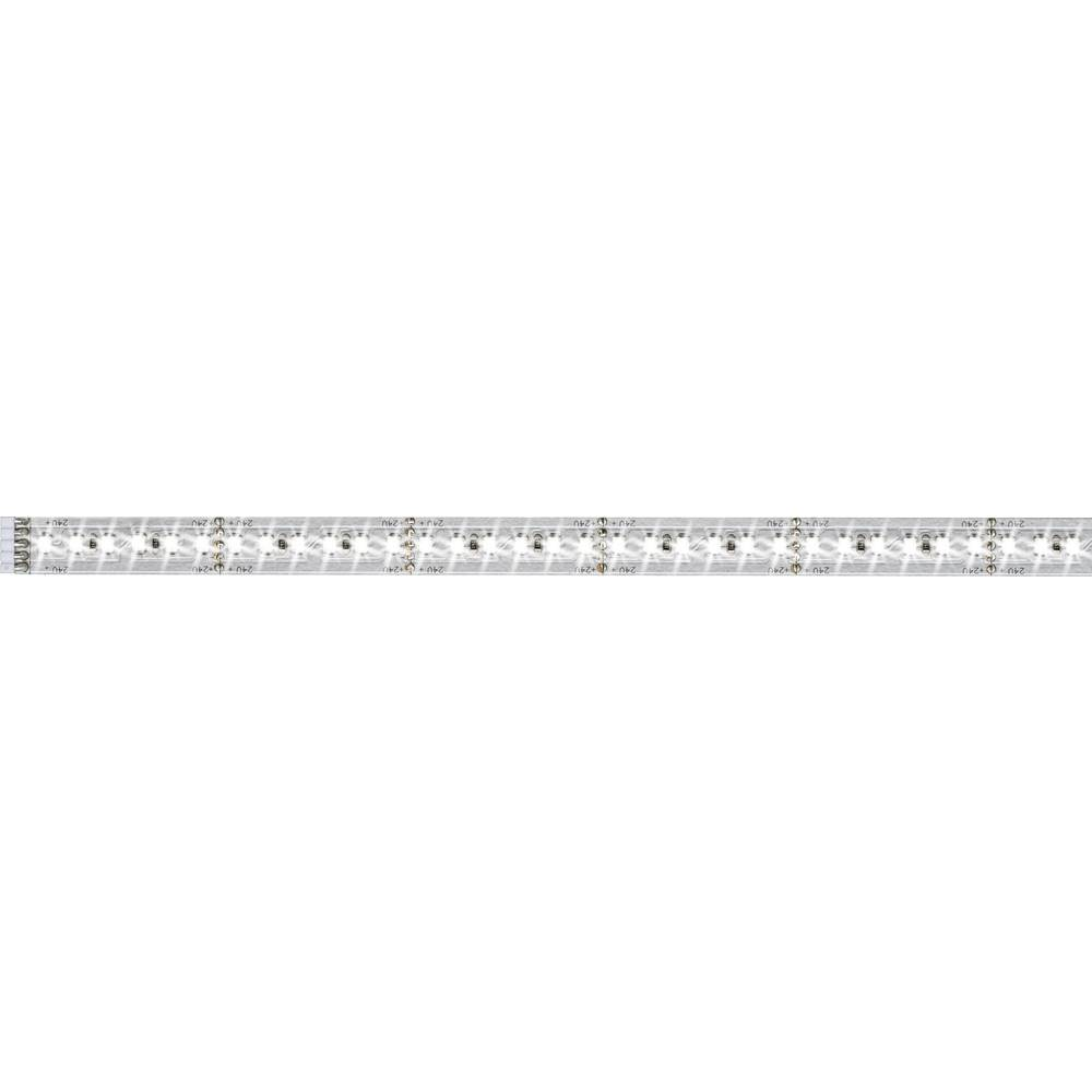 Razširitev za LED-trakove z vtičem 24 V 100 cm dnevno-bele barve Paulmann MaxLED 1000 70569