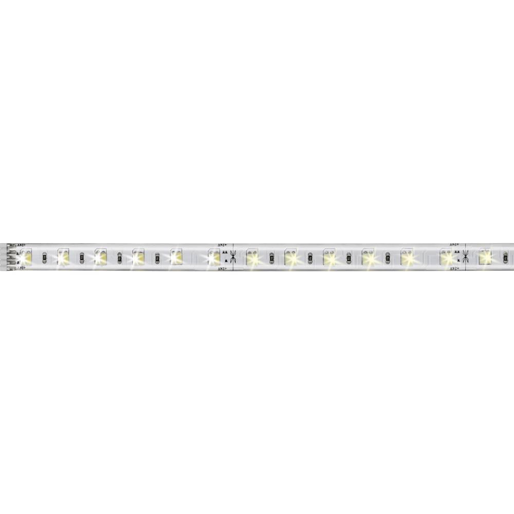 LED traka MaxLED 70629 Paulmann produžetak s utikačem 24 V 50 cm toplo-bijelo svjetlo, neutralno-bijelo svjetlo, dnevno-bijelo s
