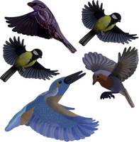 Ablakkép Gardigo Stickers Native Birds Elriasztás 1 db Gardigo