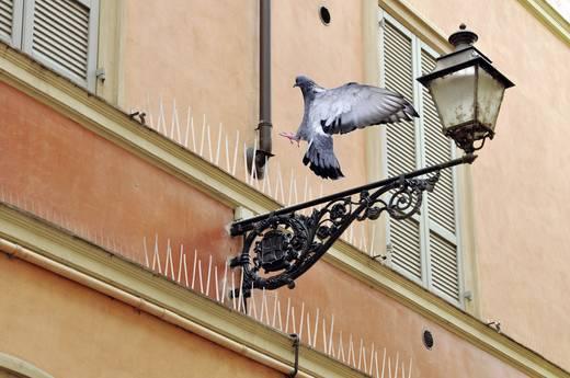 Galambriasztó tüske, 100 cm, madárriasztó, Swissinno Natural Control 1 720 001K