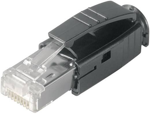 STX RJ45 dugó dugó, egyenes Pólus: 8P8C STX átlátszó Telegärtner J80026A0001
