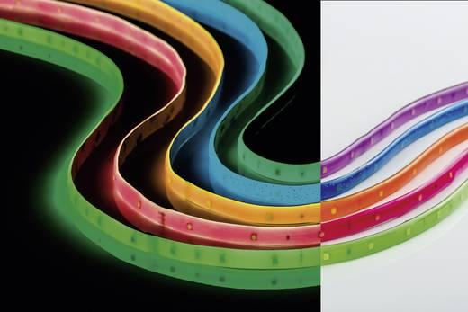 LED szalag készlet, 12 V, 300 cm, neon-lila, Paulmann Basis DECO 70505