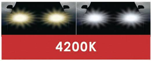 DINO Fényszóró lámpa Super-White XENON-Look 12 V 1 pár PK22s, kék