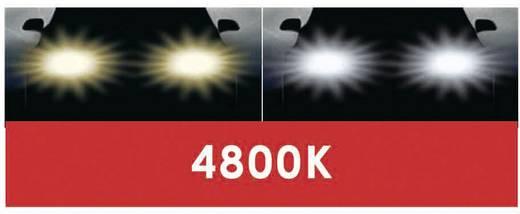 Fényszóró lámpa Super-White XENON-Look 12 V 1 pár, kék DINO 130070