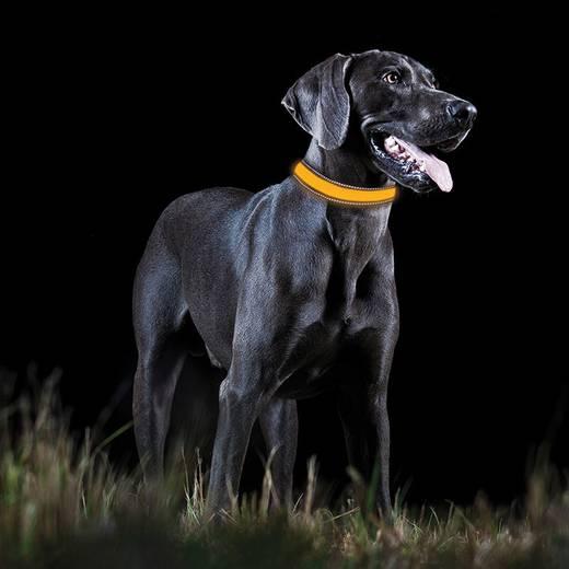 LED-es kutyanyakörv, narancs, M, Tractive
