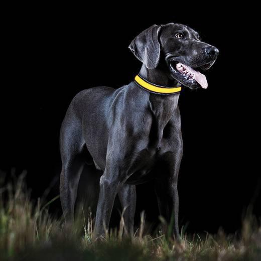 LED-es kutyanyakörv, sárga, L, Tractive