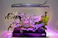 Venso LED növény lámpa, növekedés 65 cm 230 V Fixen beépített LED-es 35 W N/A 1 db Venso