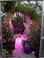 Venso LED növény lámpa, növekedés 65 cm 230 V Fixen beépített LED-es 60 W N/A 1 db Venso