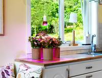 Venso Növény lámpa 89.5 mm E27 6 W N/A Izzólámpa forma 1 db Venso