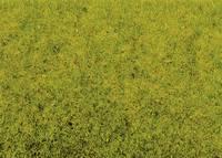 Szórt fű Tavaszi rét NOCH 8300 Világoszöld NOCH