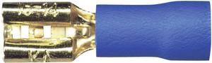 10 részes készlet 2.5 mm² 4.8 mm Sinuslive Aranyozott (FS 4,8-2,5 FLACHSTECKER, 10 STÜCK) Sinuslive