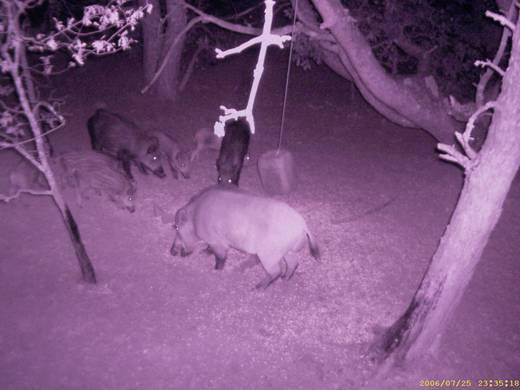 Vadmegfigyelő kamera 15db infra LED-del 2-4Mp felbontás Tasco Wildkamera 119234 Trail Camera