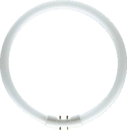 Fénycső, 2GX13, 40 W, melegfehér, Osram Lumilux T5 FC Circline