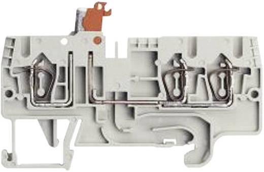 Sorkapocs, fázis WKFN 2,5 TKM 1/2/35 szürke Wieland Szürke Tartalom: 1 db