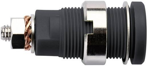 Biztonsági labor alj Alj, beépíthető, függőleges stift Ø: 4 mm Fekete Schützinger SEB 6445 Ni / SW 1 db