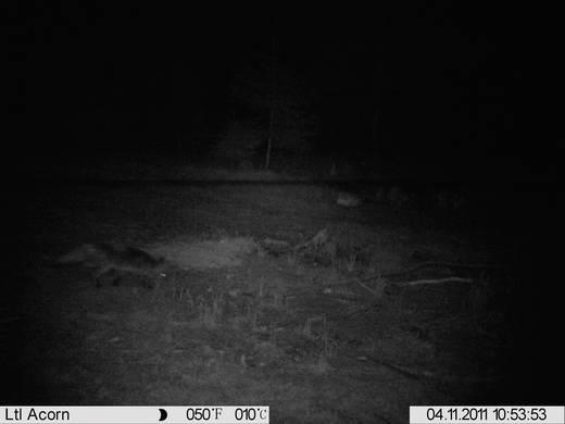 Vadállat megfigyelő kamera, infravörös, 12 megapixel, 31277